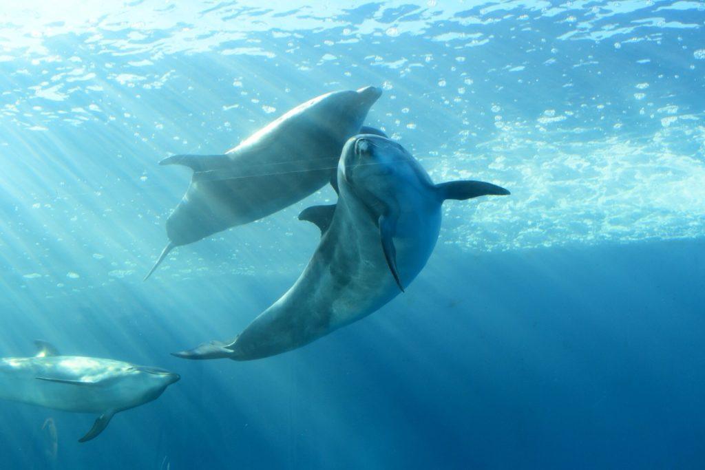 海の中のイルカ、ラッセンのイメージ